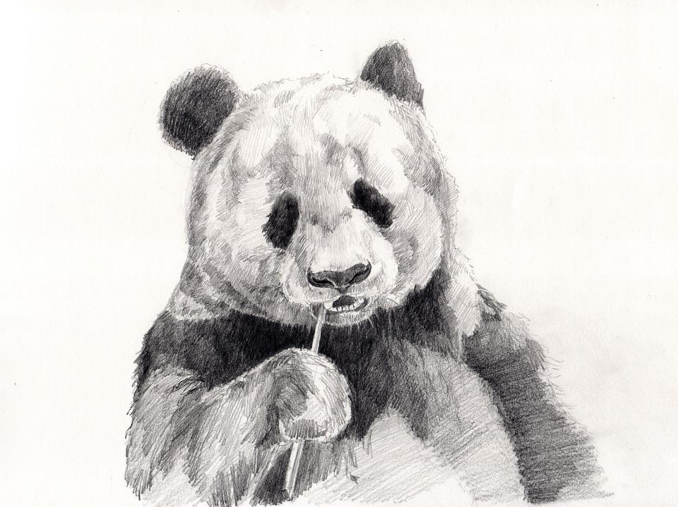 ▷▷▷TOP ➉ MEJORES DIBUJOS DE PANDAS ☆ 【 ¡ADORABLES! ❤】