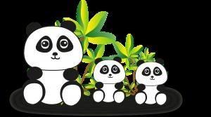 osos panda adorables